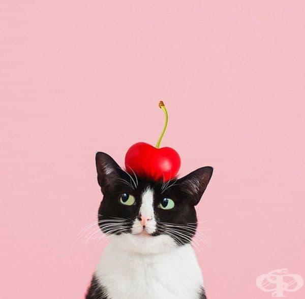 Принцеса Чито е истинска звезда в социалните мрежи