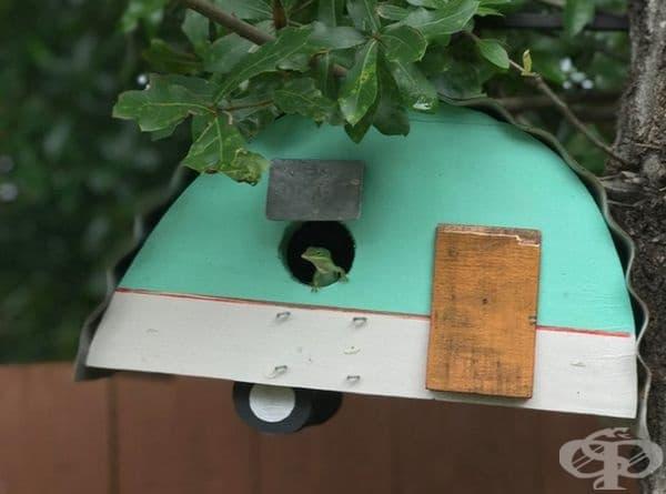 Това е гущер, който се настани в къщата за птици.