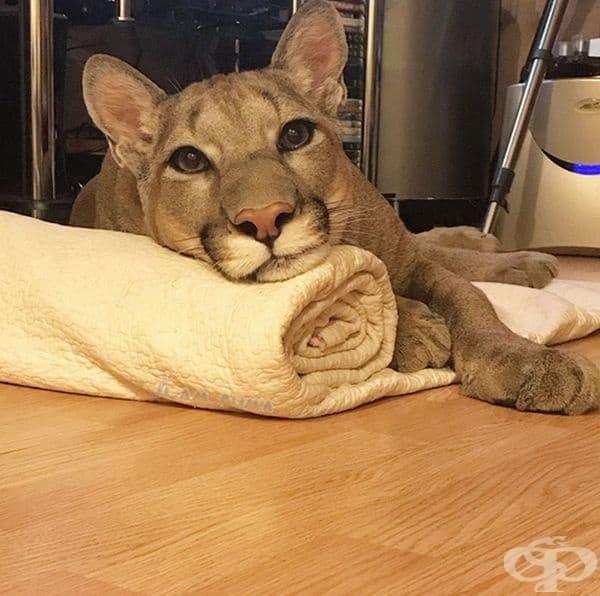 Животното е било продадено на Саранската зоологическа градина на три месечна възраст.