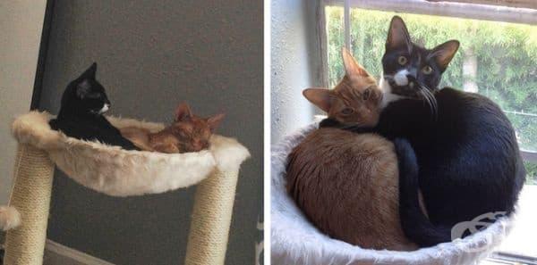 Отдавна са пораснали, но все още предпочитат да спят заедно.