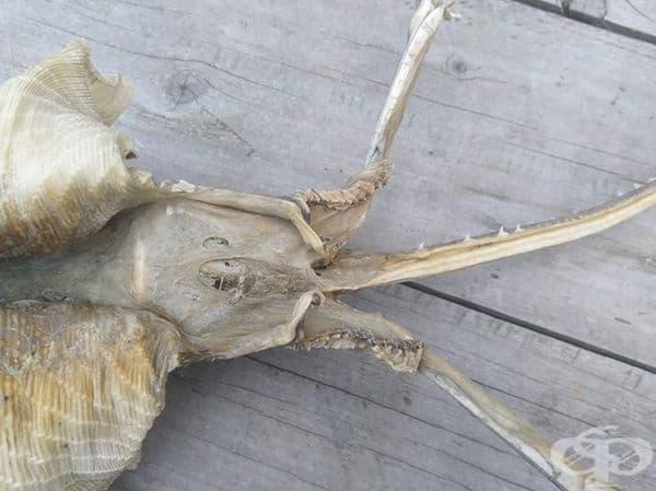 Скелетът е открит от местните жители - Хана Мери и майка й.