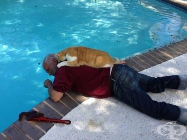 Тази котка винаги придружава стопанина си, който поддържа плувни басейни.