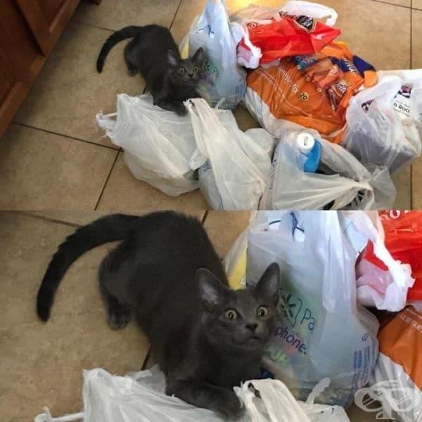 Моята котка винаги проверява какво нося от хранителния магазин. Ето мигът, в който тя усеща аромата на печено говеждо месо.