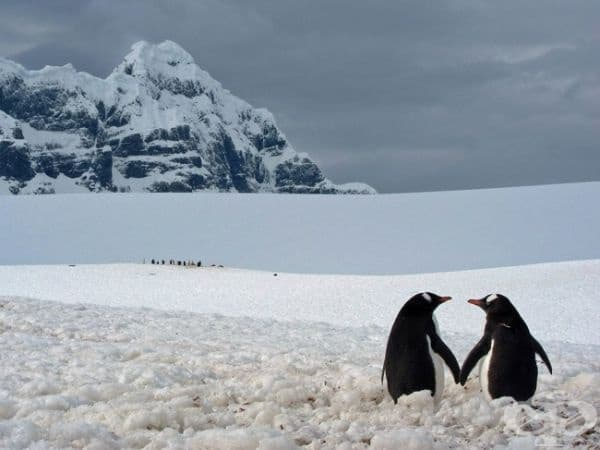 Двойка пингвини, Антарктика. (Снимка: Мариус Илис)