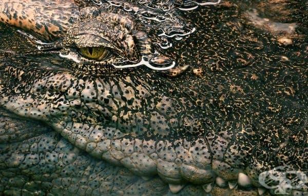 Сиамски крокодил