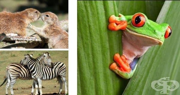 Прерийните кучета се поздравяват взаимно с целувка. Зебрите спят прави и една до друга. Червенооките дървесни жаби могат да снесат преждевременно яйцата си, ако усетят опасност.