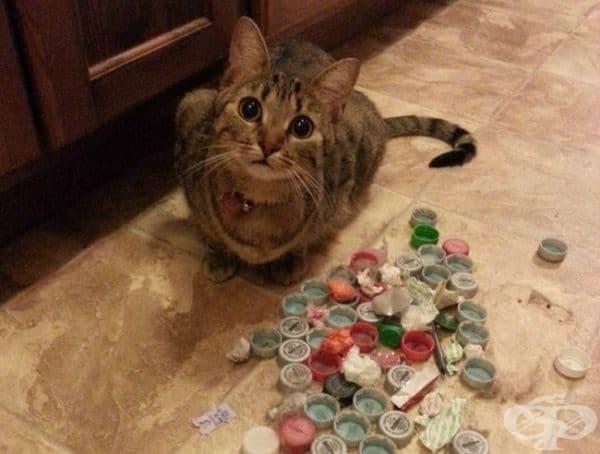 Изражението на моята котка, когато открих нейните скрити запаси.