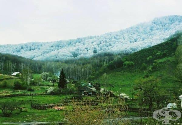 Снеговалеж в Алтай.