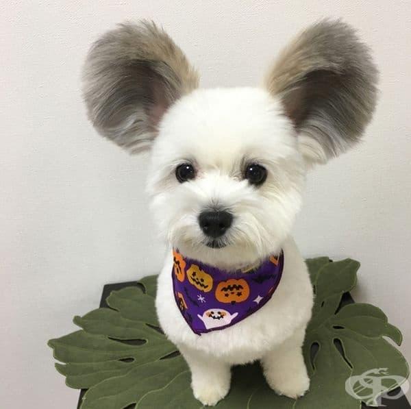 Кученце с уши на Мики Маус.