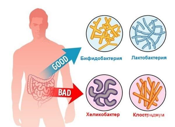 Здравословна бактериална флора. Бадемите съдържат пребиотици, необходими за растежа и умножаването на бактериите в червата. При наличие на дисбаланс (стомашно болка, лошо храносмилане, лош дъх) е препоръчително да се ядат 30-35 бадеми на ден.