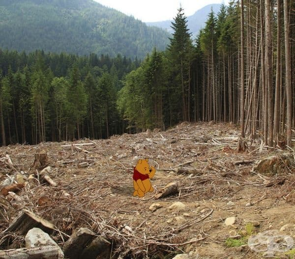 Мечо Пух на територия с обезлесени стотици акри гори.