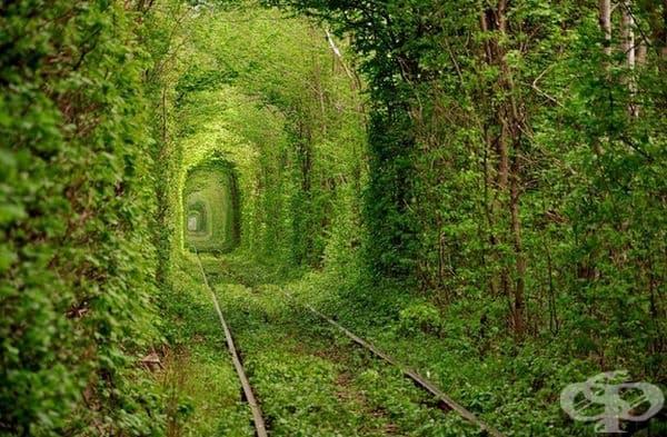 Изоставена железница, превърнала се във великолепен зелен тунел.