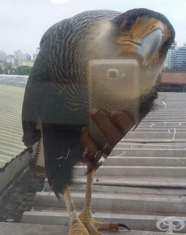 Птица си прави селфи.