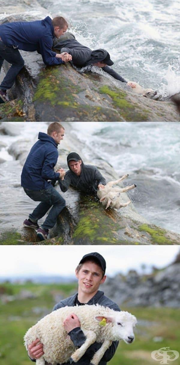 Тези две момчета от Норвегия рискуваха живота си, за да извадят агнето от океана.