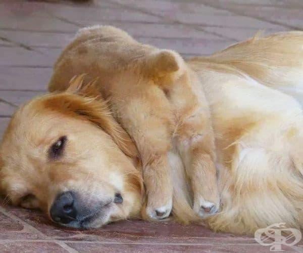 Дори и да е уморена ...
