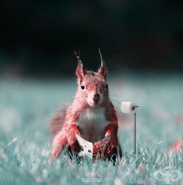 Френски дигитален художник използва умело Photoshop и създава фантастични животни