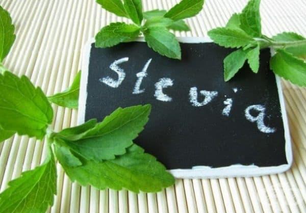 Стевия също е едно от средствата за намаляване на апетита. Листата на стевия са 10-15 пъти по-сладки от захарта и в същото време имат нулево калорично съдържание! Предлага се в различни форми: листа, суха трева, сироп, екстракт, еликсир.
