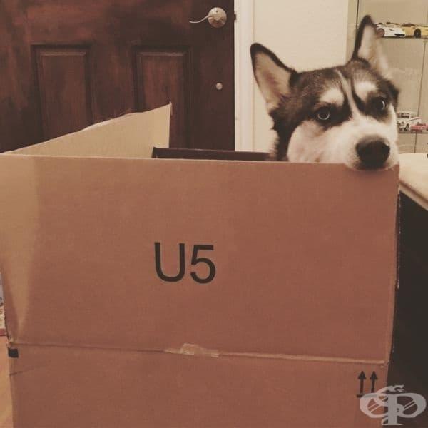 Не само са сладки колкото котките, но тези кучета обичат кутиите, също като тях.