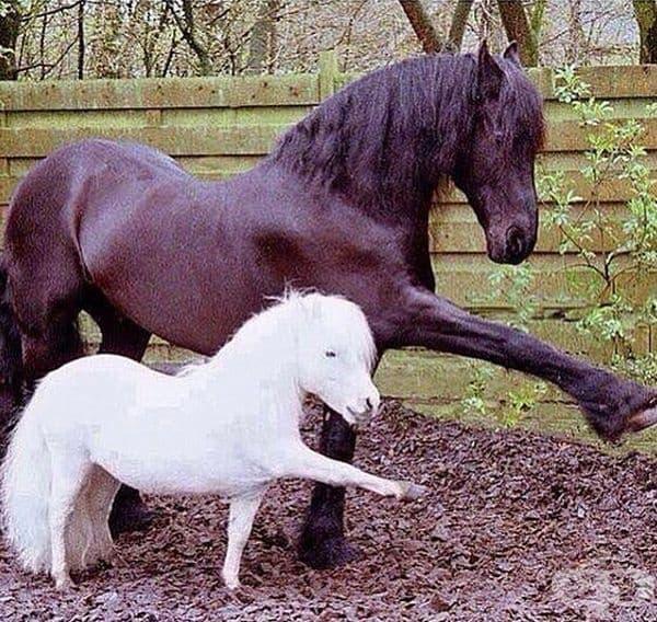 Животните са пример и за други животни.