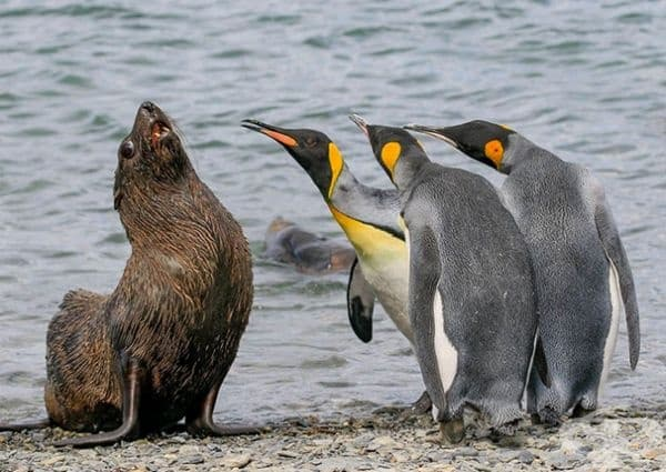 """""""Просто ни кажи къде си скрил рибата?"""""""