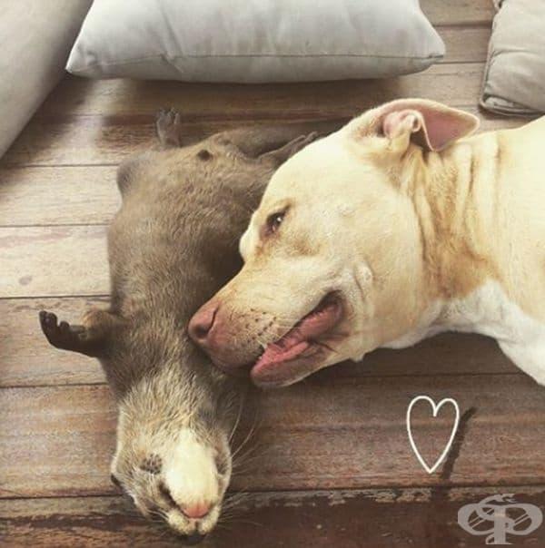 Куче и видра, задружни приятели.