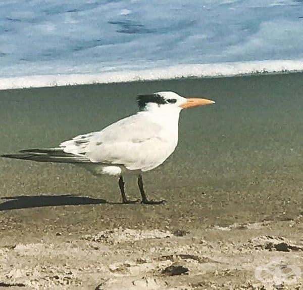 Тази чайка не ви ли прилича на Дани Де Вито?