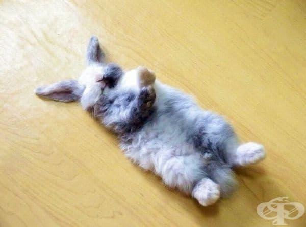 """""""Ето така спи моя заек""""."""