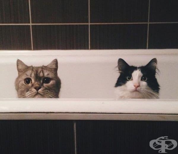 Всеки път, когато отида до тоалетната, виждам това.