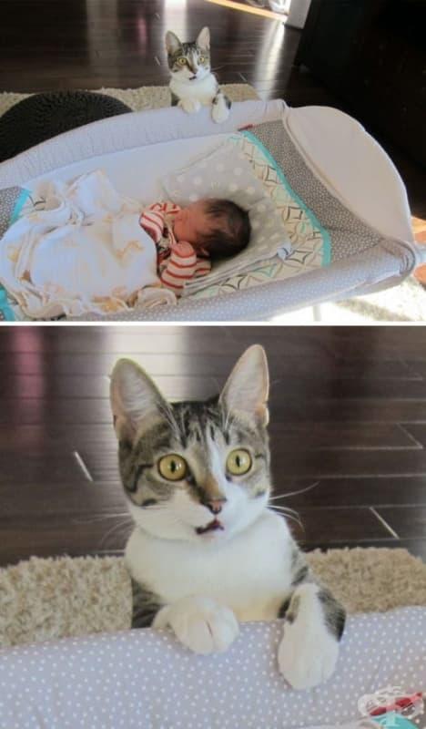 """""""Забравихме да кажем на котката, че имаме бебе."""""""