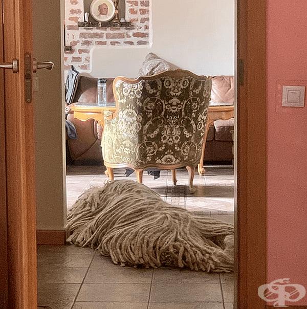 Те са идеален помощник в почистването на дома. Разбира се, след това трябва да почистите и кучето.