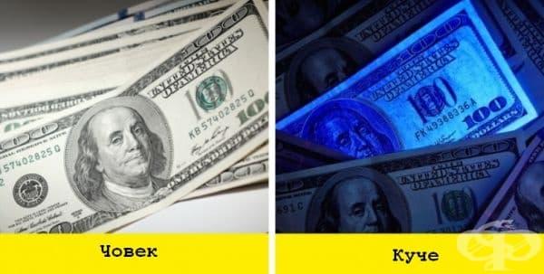 Кучетата могат да различават фалшивите банкноти, въпреки че парите нямат стойност за тях.