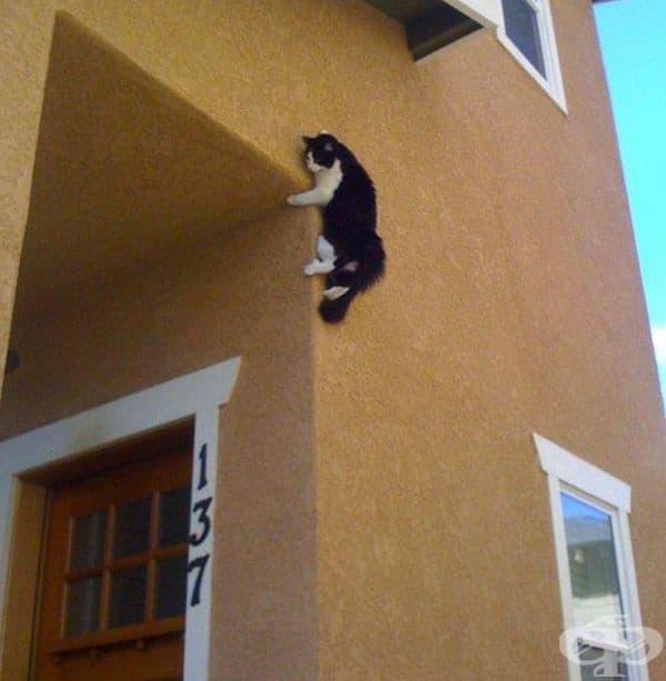 Вероятно иска да влезе през прозореца.