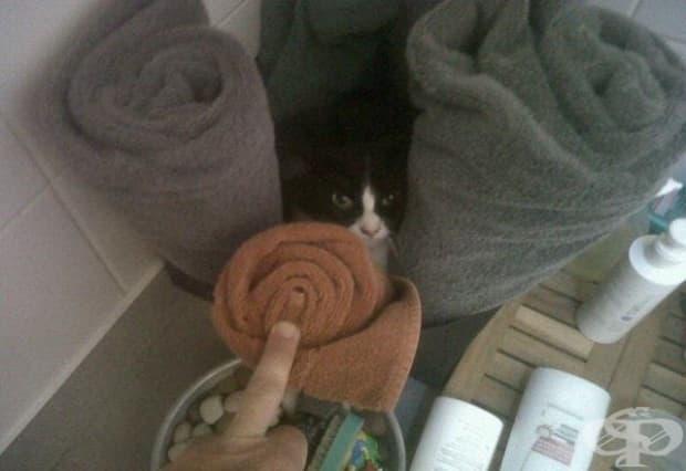 """""""Баща ми току що ми изпрати тази снимка на банята ни. Ние нямаме котка."""""""
