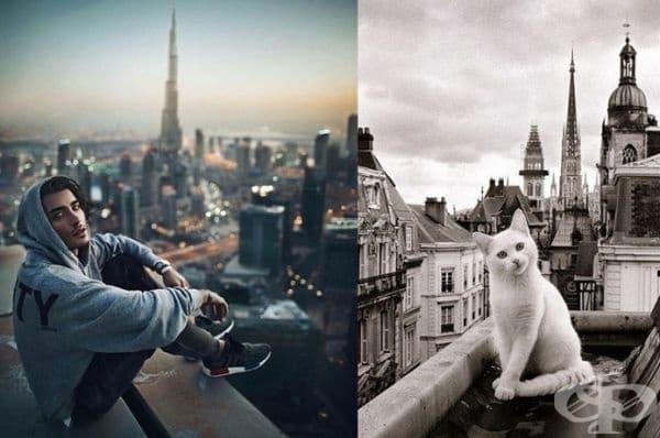 20 забавни колажа, които показват, че между котките и красивите мъже има нещо общо