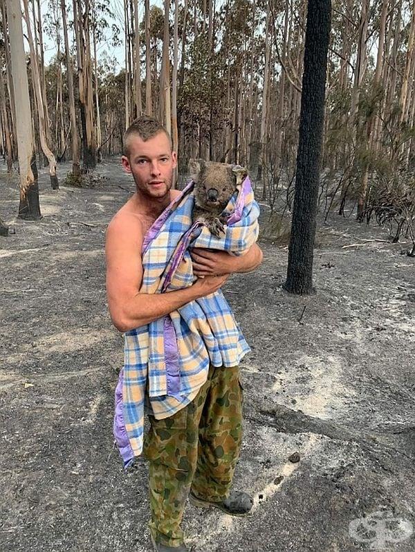 Този млад човек издирва ранени диви животни. Това е една от 7-те коали, които той е спасил досега.