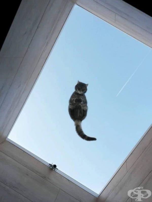 Вашата очарователна котка ще ви следва неуморно през целия ден, критикувайки мисловно всичко, което правите.