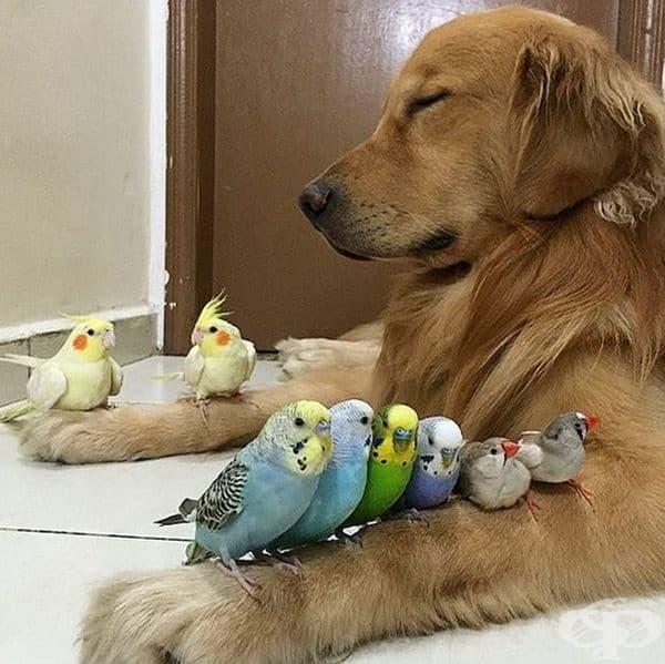 Куче и папагали в перфектна хармония.