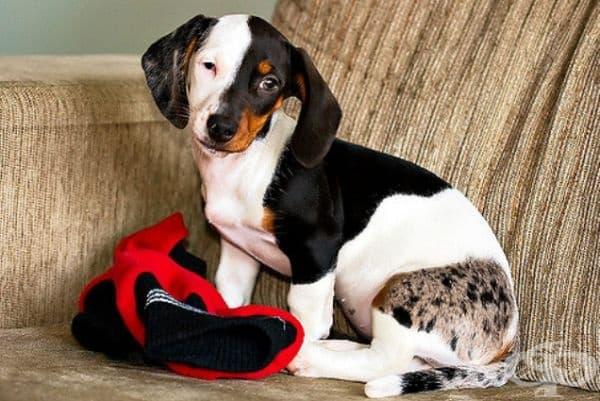 Тримесечно куче с крайно рядка окраска.
