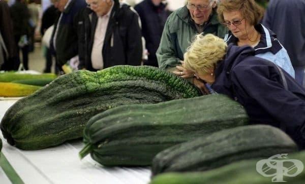 Още една снимка от същата изложба, на която посетителите се възхищават на реколтата и дори помирисват зеленчуците.