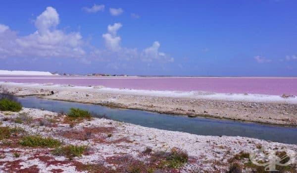Подобни розови водни обекти може да се видят и на други места по света: от езерото Ретба в Сенегал до Салинас де Торевиеха в Испания и Пекелмеер на Карибския остров Бонер.