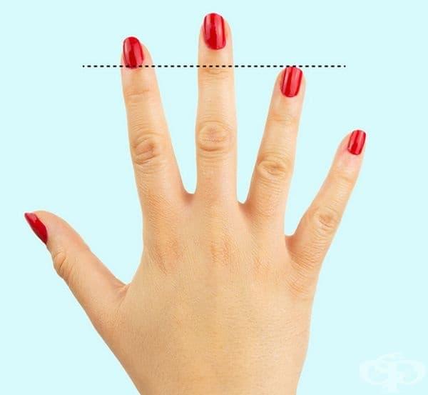 Дължина на безименния пръст. При по-голяма дължина на безименния пръст от показалеца съществува по-голям риск от сърдечни заболявания.