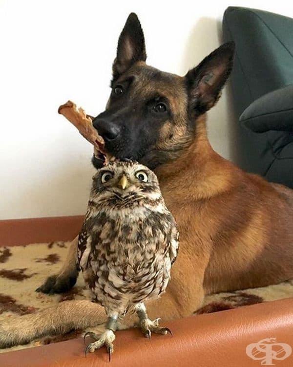 Приятелите трябва да са от различни породи.