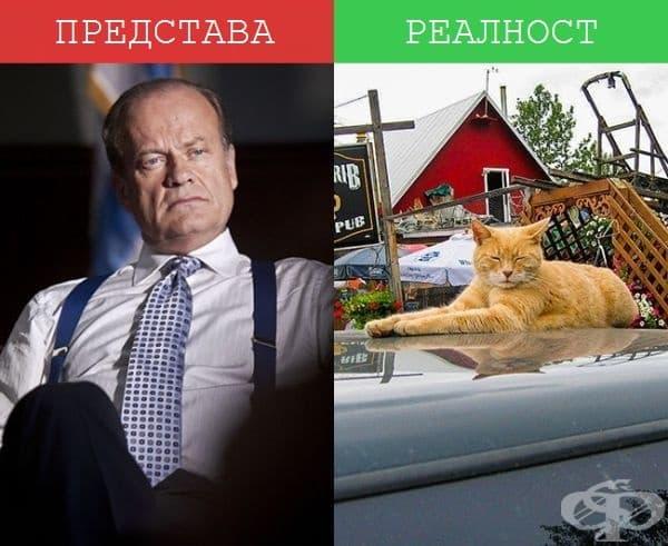Кметове - Вдясно: Кметът на Talkeetna, Аляска. Да, точно така. Той е котка! Неговото име е Стъбс и заема кметския пост близо 19 години. Интересно, как ли дава инструкции?
