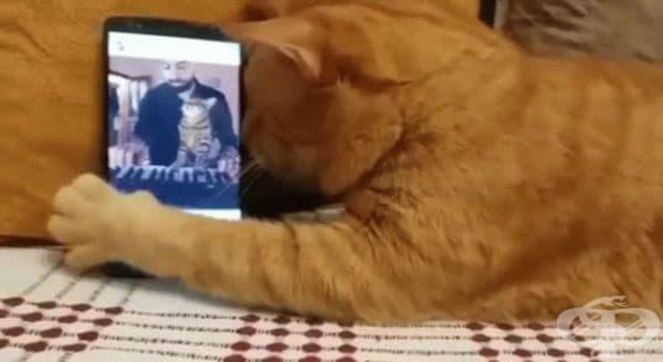 Сляпа котка слуша любимия си пианист.