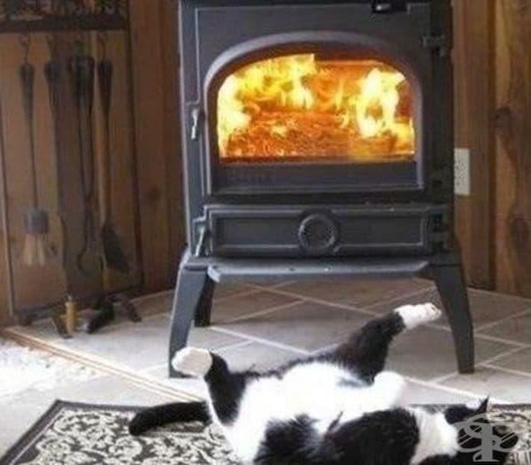 Топлината е щастие.