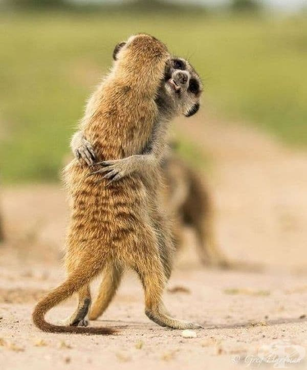 """Хайде да танцуваме!"""