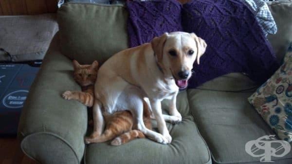 """""""Ето как разбрахме, че нашето куче не харесва котката."""""""