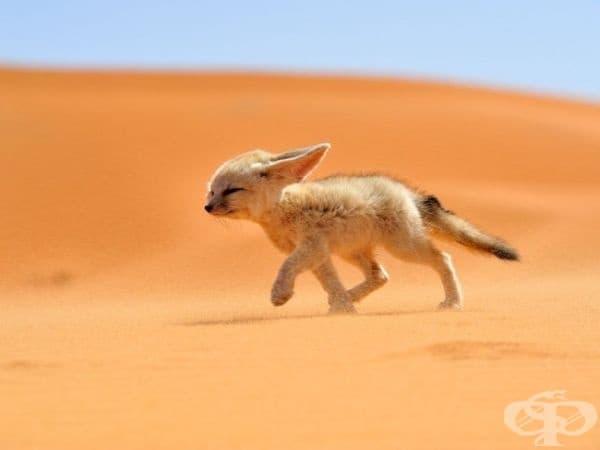 Фенек, Мароко. (Снимка: Франсиско Мингорган)