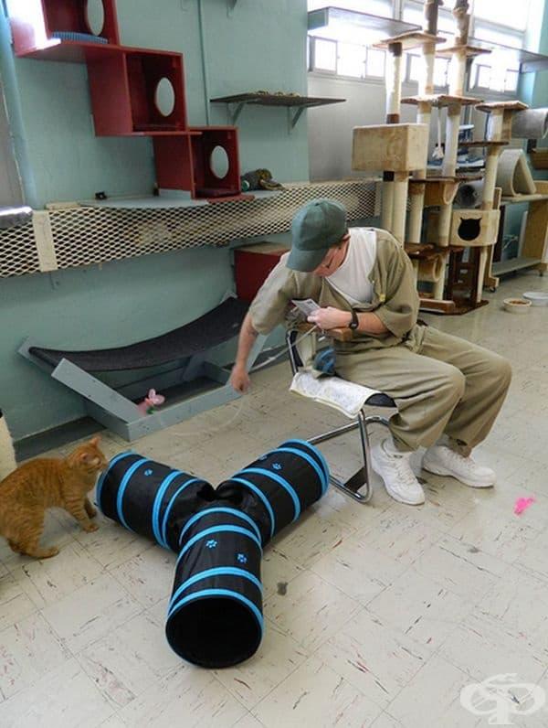 Тези котки нямат доверие в хората и имат по-малък шанс да бъдат осиновени.