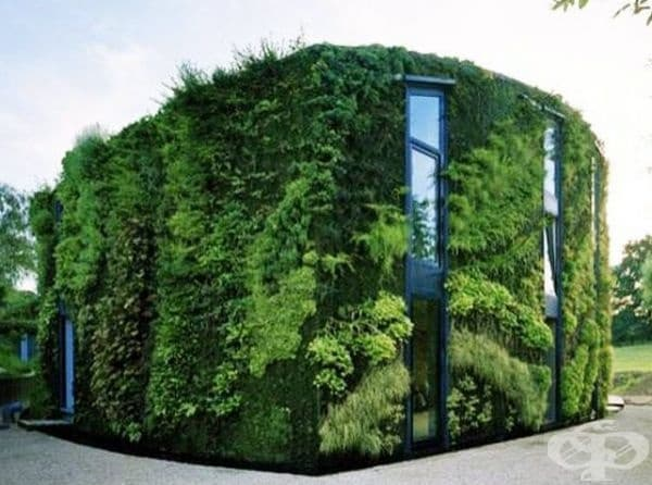 Къща, обгърната в зеленина. Стените са направени от вертикална градина и покривът е хоризонтален, също покрит с растителност.